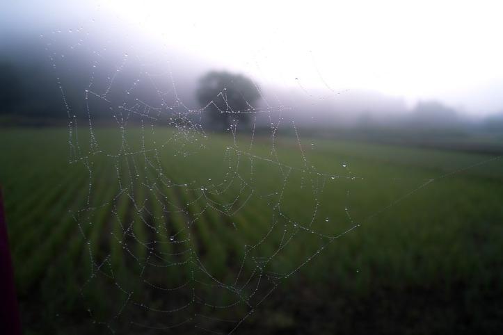 spider-web-768538_960_720