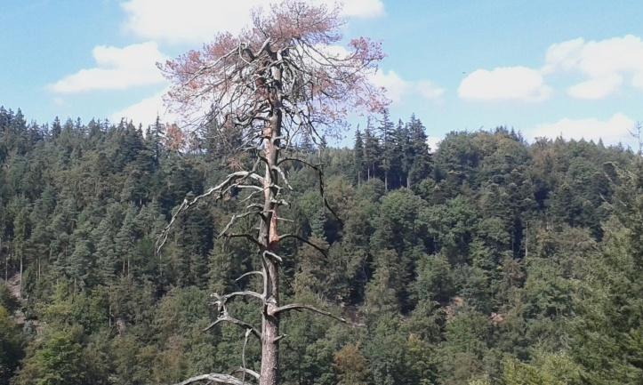 Dinosaurierzeitbaum